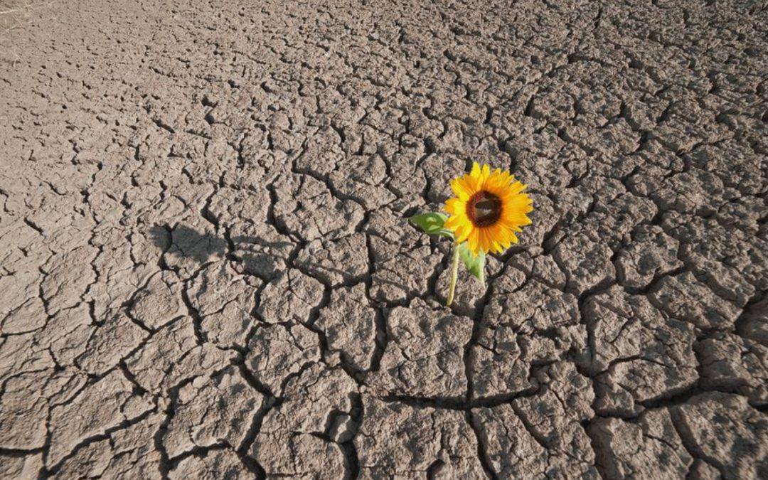 Resilienza: una propensione per non soccombere